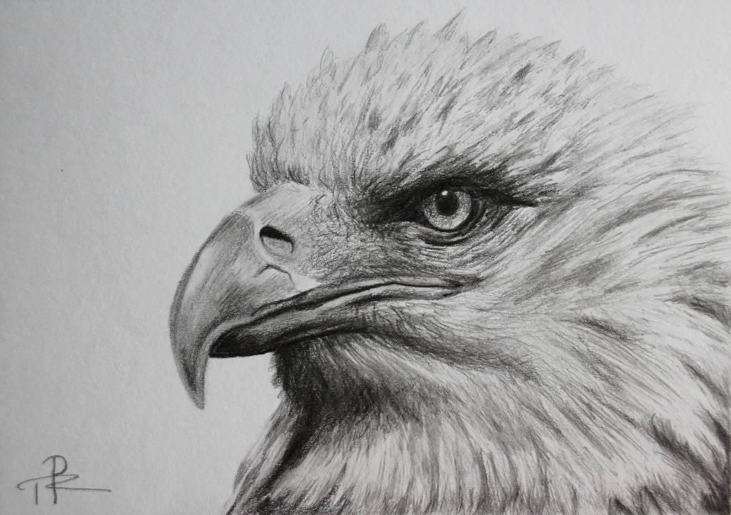 Eagle drawing by game developer Tereza Preislerova